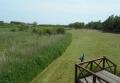 左は葦の湿地帯