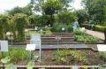 漢方薬原料植物区