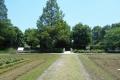 田畑の風景