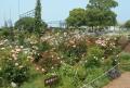 栽培養生中の花壇