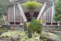 ソテツの木