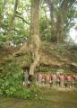 大木の根っこにある六地蔵