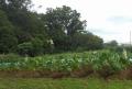 裏の畑と雑木林