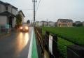濡れた路面(今朝)