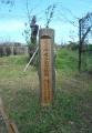 植樹の記念碑