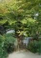 御神木(愛の木)