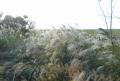向こうは多摩湖の堤体