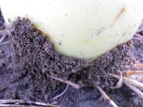 蟻の巣 2016 10 6-2