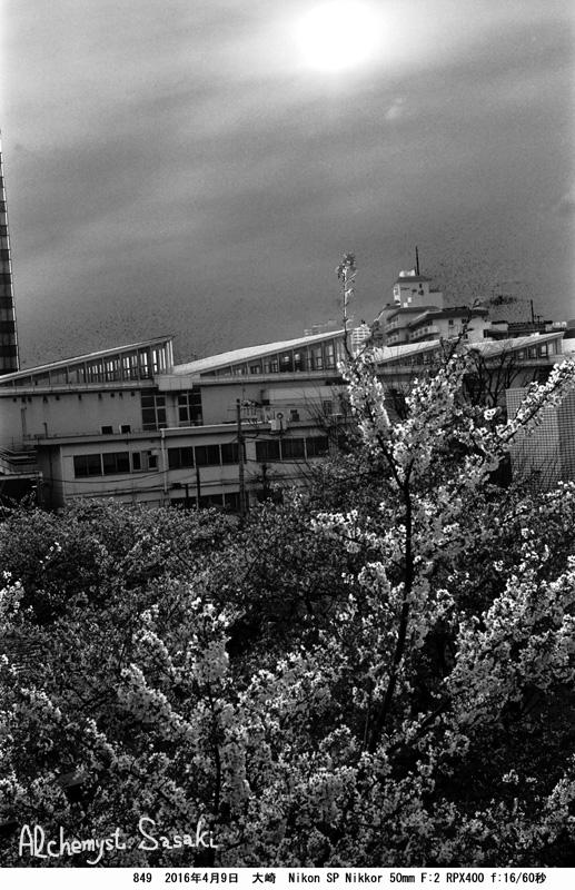 最後の桜849-41