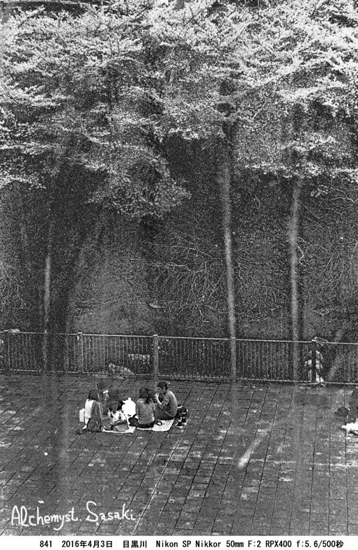 妄想の桜・彼岸にて841-45 Ⅱ
