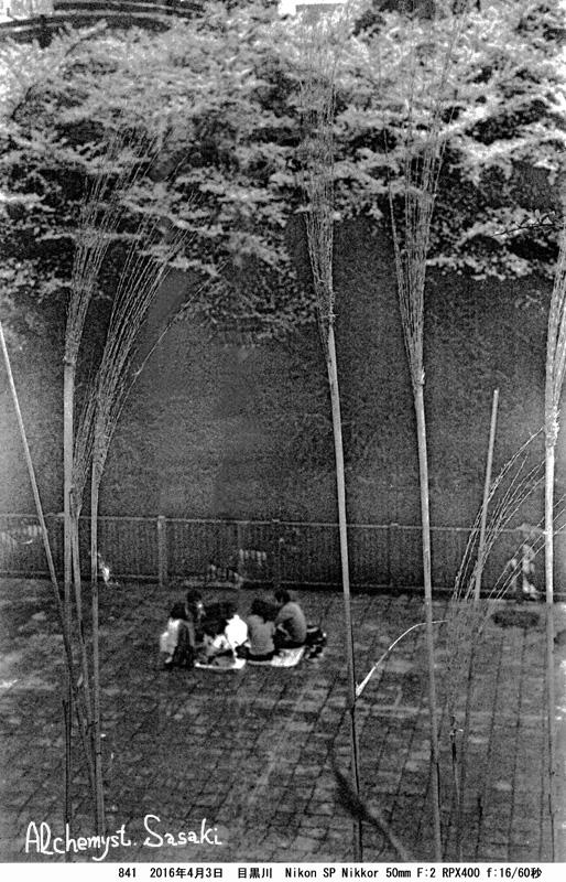 妄想の桜・彼岸にて841-49