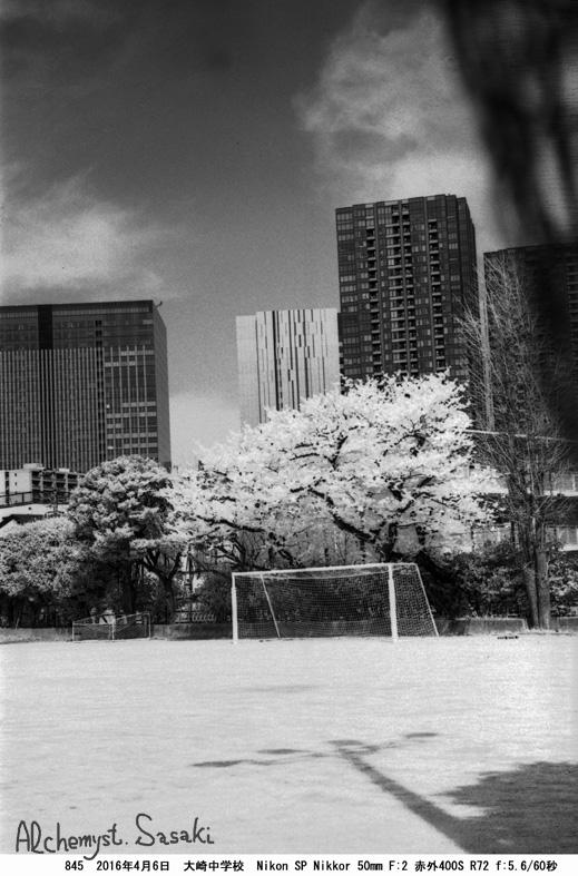 戸越の桜845-5
