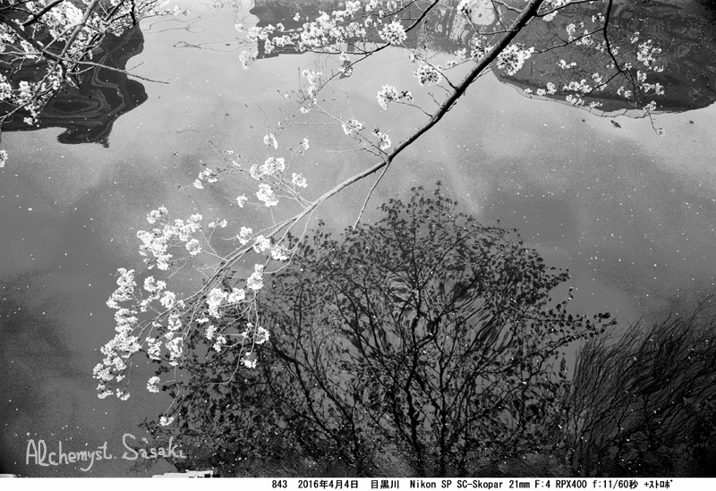川面と桜843-21