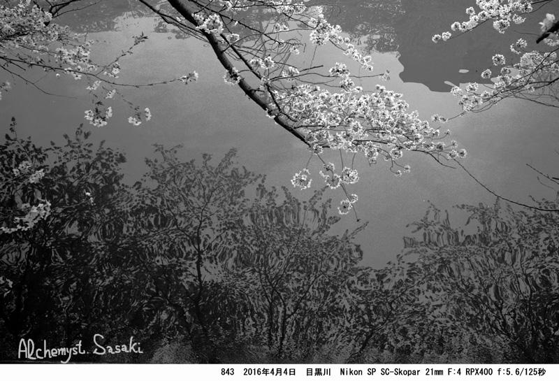 桜843-27