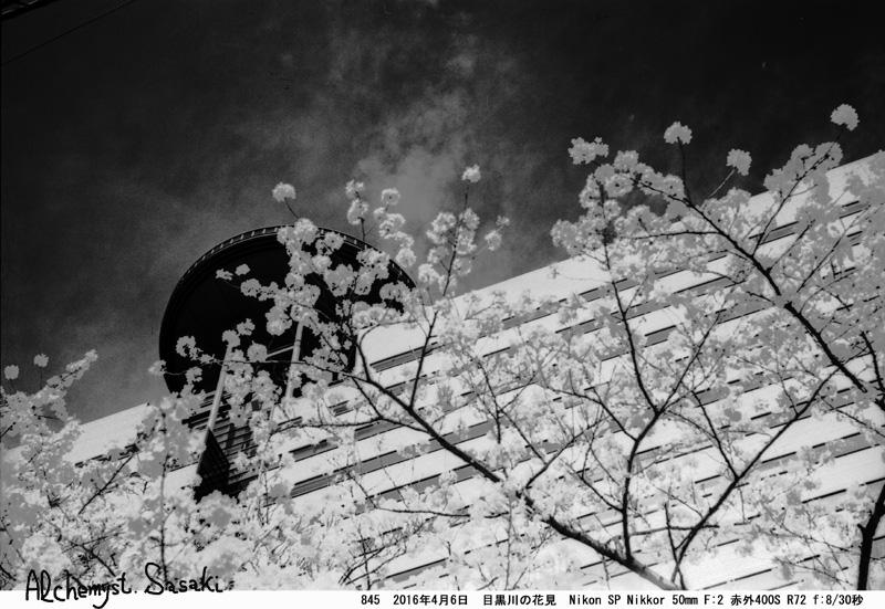 桜845-19