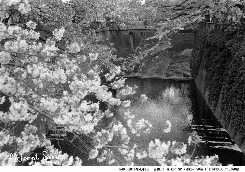 桜849-36