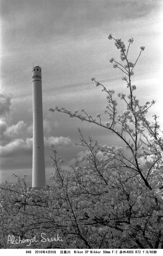 桜848-23