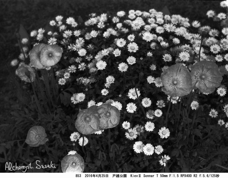 黒い花びらを求めて853-31 Ⅱ
