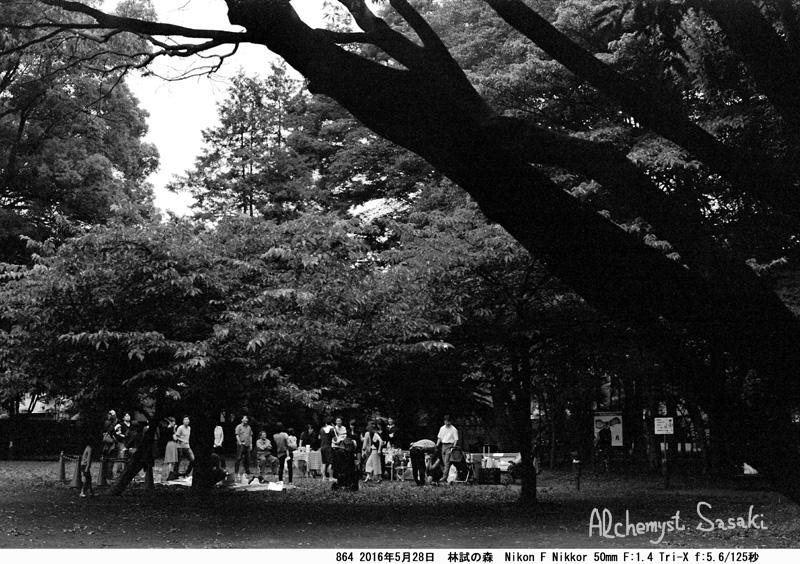 林試の森864-17