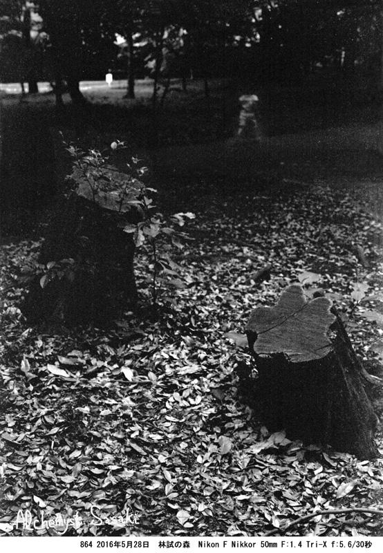 林試の森864-19