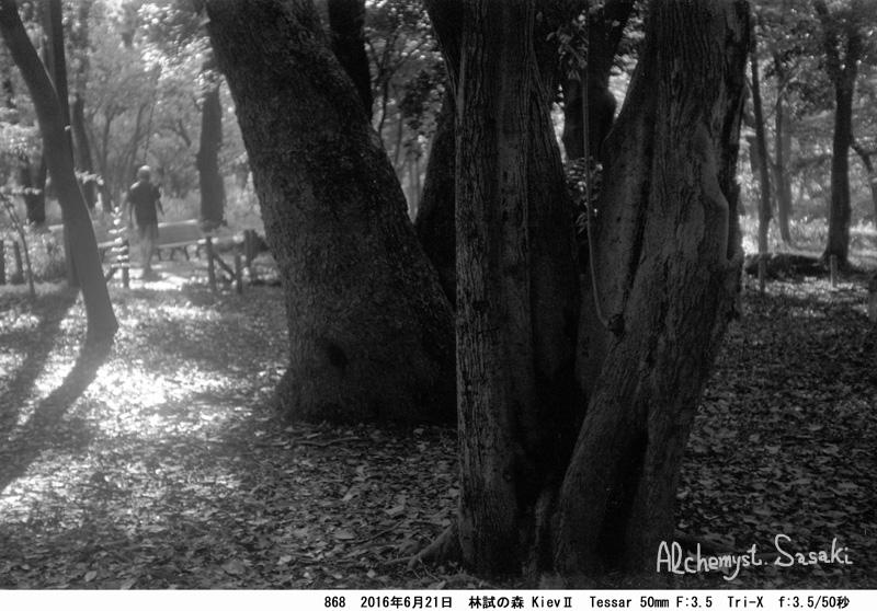 林試の森868-16
