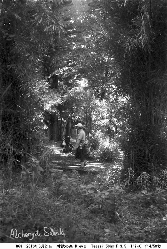 林試の森868-17