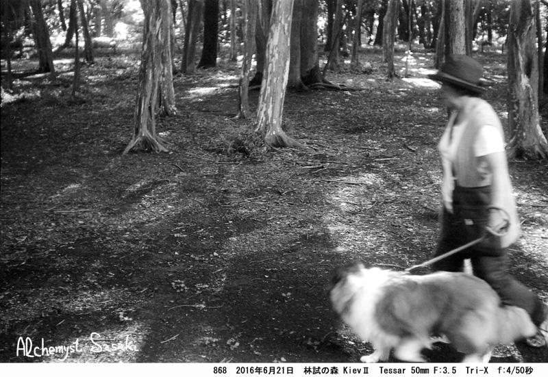 林試の森868-19