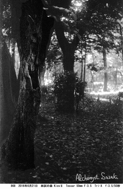 林試の森868-15