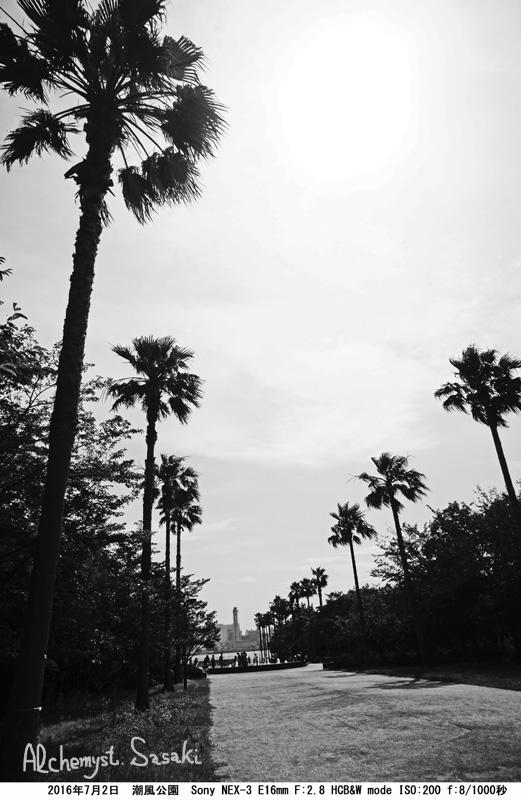 潮風公園DSC08772a