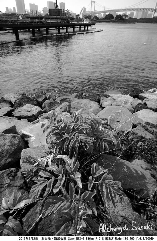 海浜公園DSC08892a