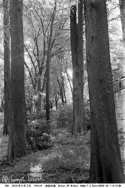 林試の森881-6