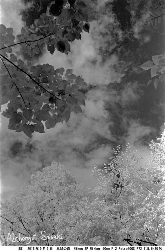 林試の森881-20