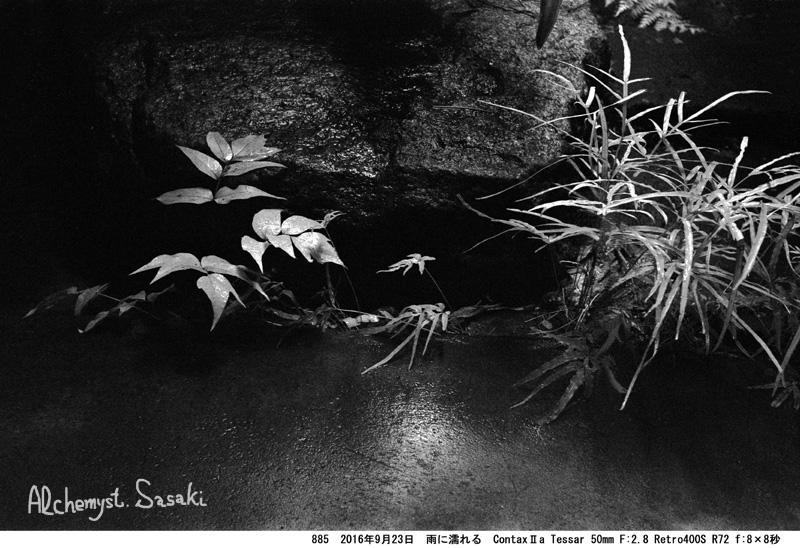 雨の庭885-25