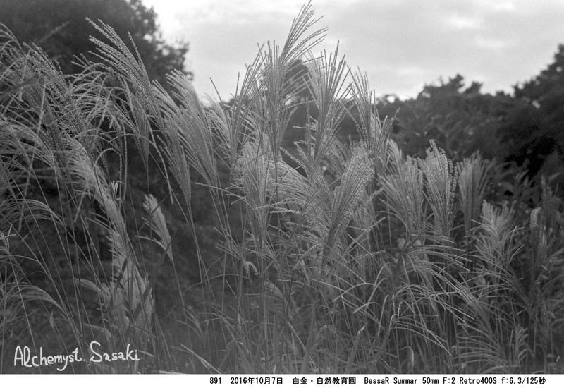 すすき(Ⅰ)>(Ⅱ)891-21