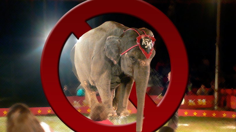 circus1_20160418222430276.jpg