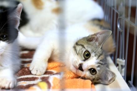 20160626_kitten03_01.jpg