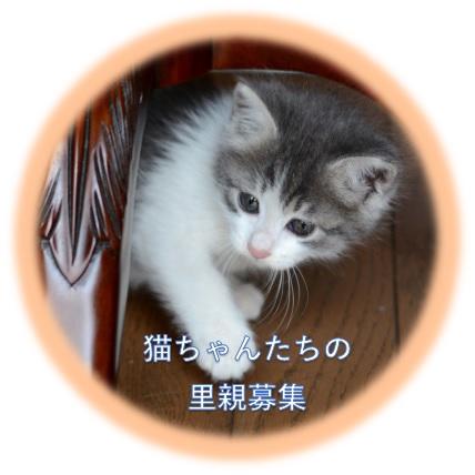 猫ちゃんたちの里親募集
