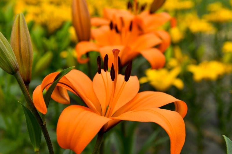 自動編集 広島世羅町の花畑ー5-1