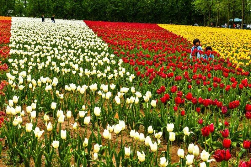 編集 広島世羅町の花畑ー6-1