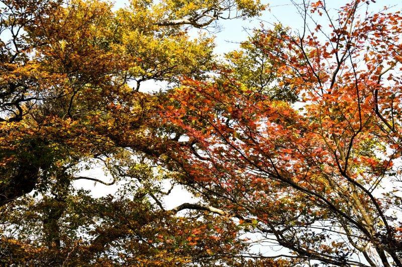 皿が嶺の秋ー4-1