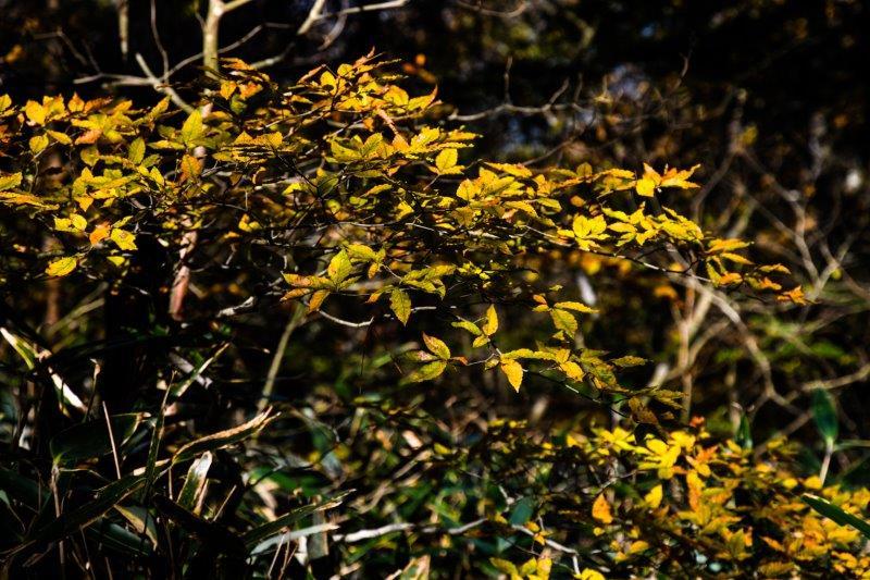 皿が嶺の秋ー15-1