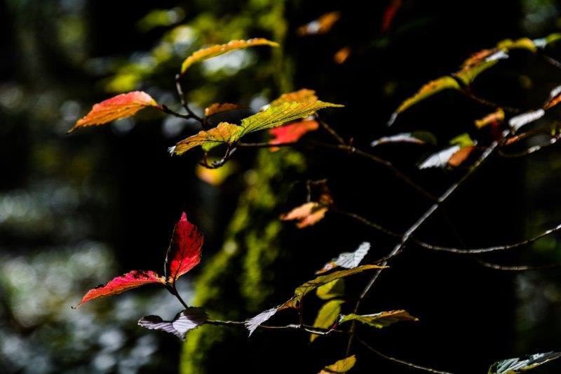 皿が嶺の秋ー22-1