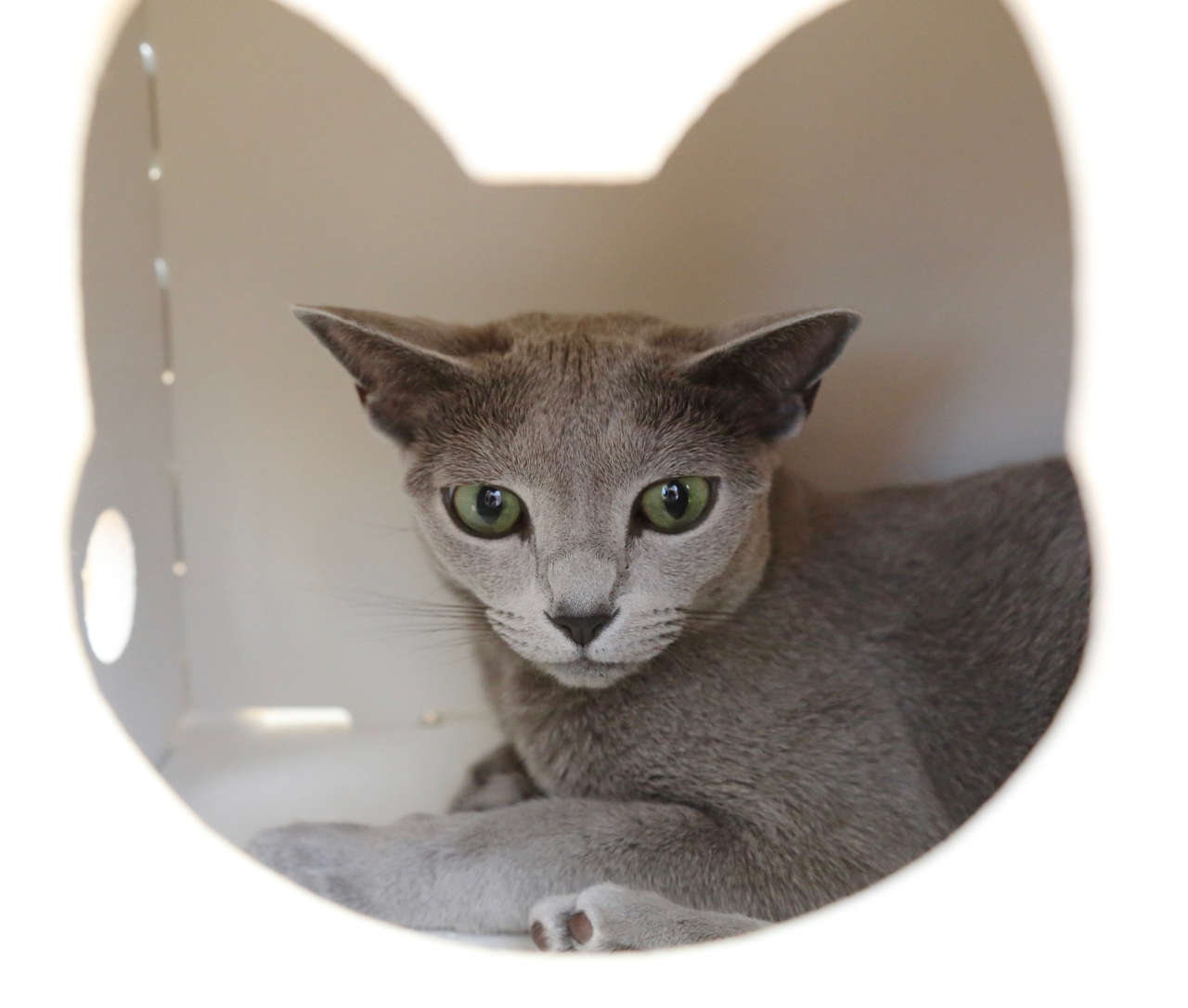 エマ、猫トンネル2