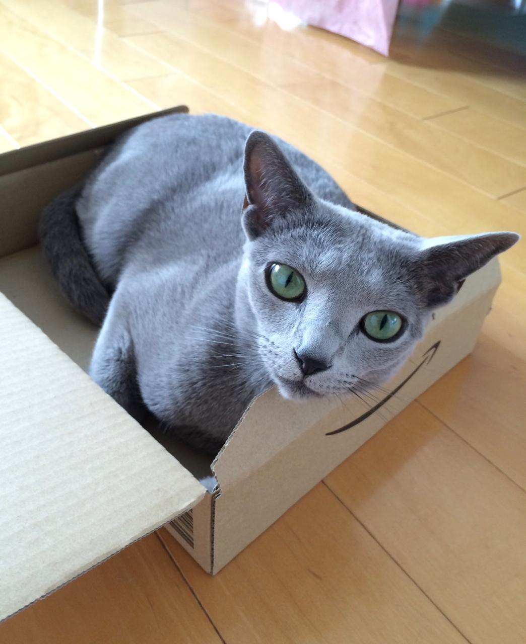 箱入りエマ