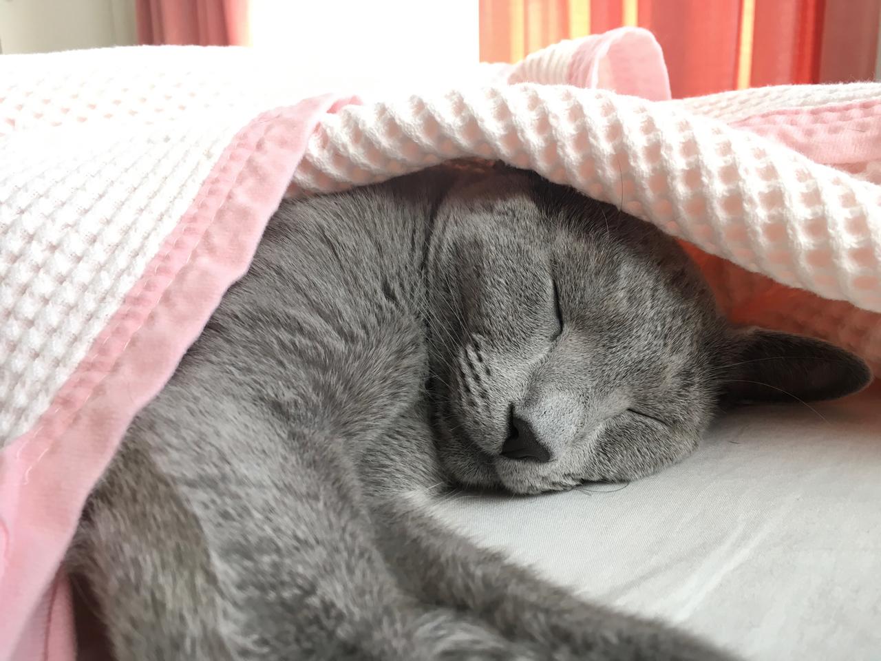 ベッドでネンネ