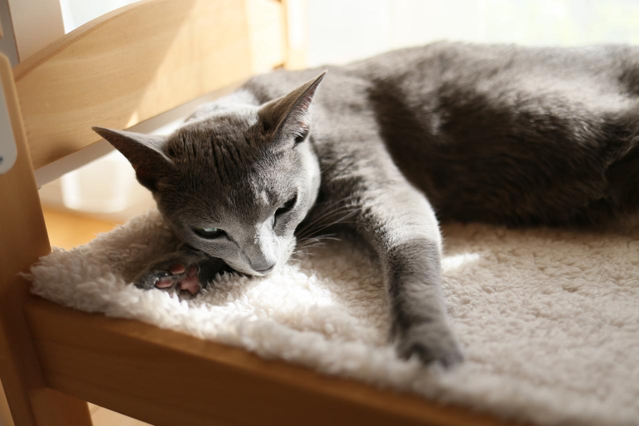 アン寝転んでフミフミ