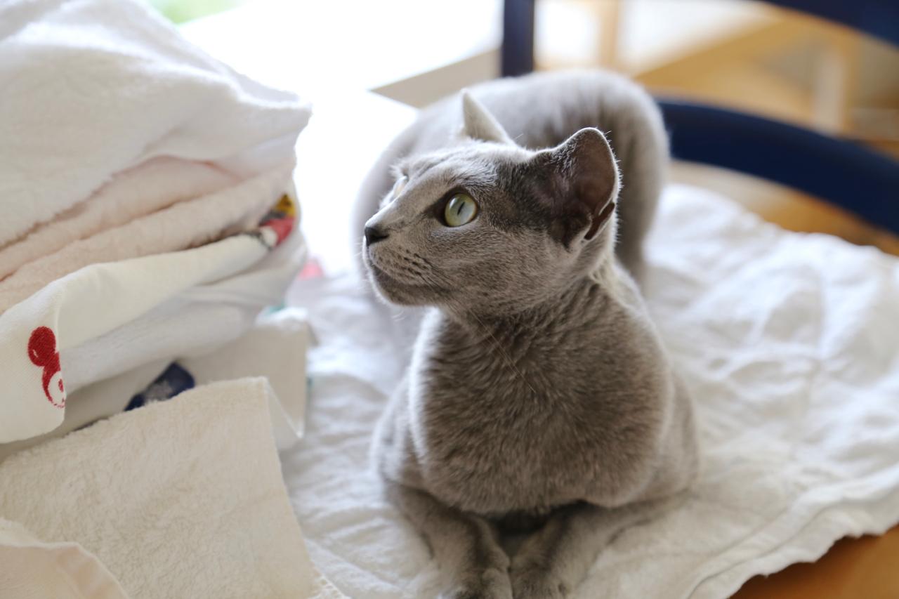 洗濯物上 横顔