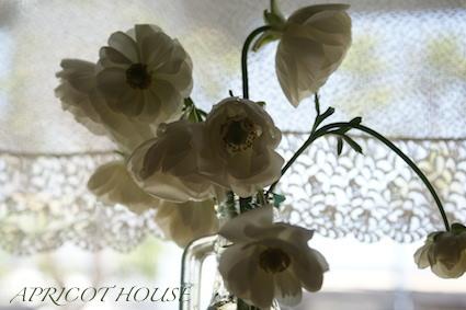 160412花瓶のラナンキュラス