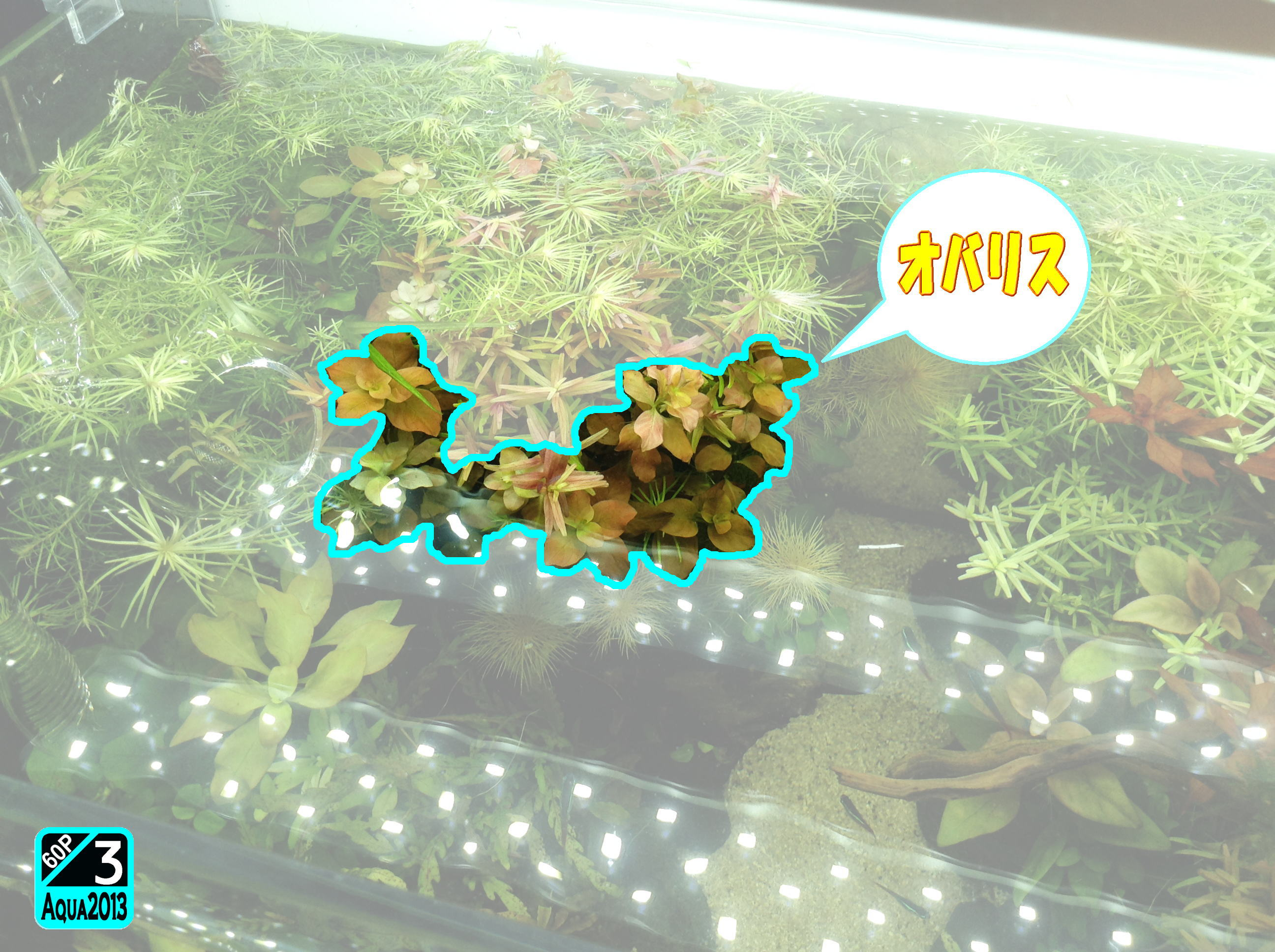 Aqua2016_0821f_003.jpg
