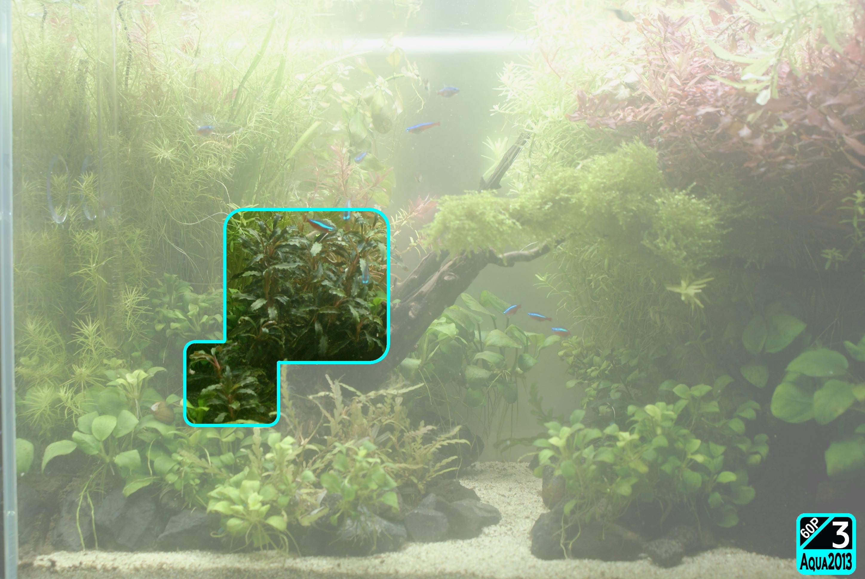 Aqua2016_0925c_005.jpg